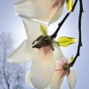 "Dace Umblija, Open Class, ""Magnolias"""