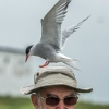 "Keith Greig ""It's Your Tern"""