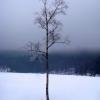 Open Class - Lone tree, by Dace Umblija.