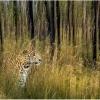 Jungle Encounter